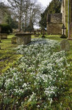 Snowdrops at St. Marys Norman Church, Beverston Royalty Free Stock Image