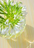 Snowdrops in a vase Stock Photography