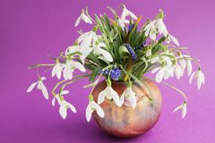 Snowdrops in vase Royalty Free Stock Photos
