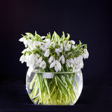 Snowdrops in vase. Bunch of snowdrops in transparent vase on black background Stock Image