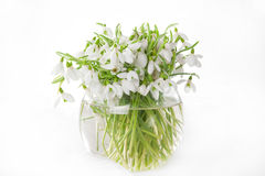 Snowdrops in vase. Bunch of snowdrops in transparent vase isolated on white Royalty Free Stock Photo