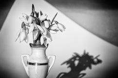 Snowdrops in vase Stock Photos