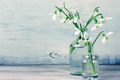 Snowdrops in vases Royalty Free Stock Images