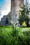 Snowdrops in village church yard Royalty Free Stock Photography