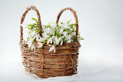 Snowdrops in wicker basket Stock Photos