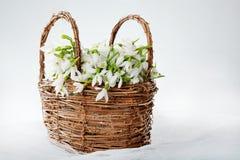 Snowdrops in wicker basket Stock Photos