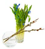Snowdrops and willow Stock Photo