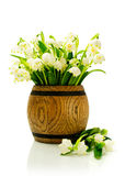 Snowdrops in a wooden cask Royalty Free Stock Image