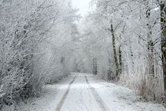 Snowed alley between trees and bushes Royalty Free Stock Image