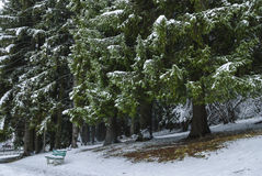 Snowed benches under fir trees Royalty Free Stock Images