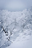 Snowed Forest. View on the snowed trees from the top Royalty Free Stock Photos