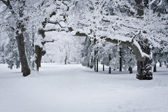 Snowed Forest Stock Photo