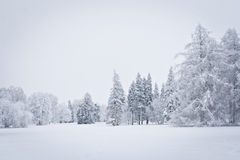 Snowed Forest. View on the snowed trees Stock Photos