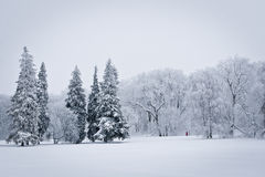 Snowed Forest Royalty Free Stock Photography