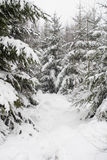 Snowed forest. A lot of snow in the forrest stock images