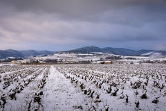 Snowed landscape of Beaujolais with vineyards and Montmelas cast. Le, France stock image