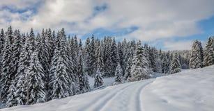 Snowed lantlig väg, Schweitz Fotografering för Bildbyråer