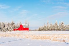 Crisp Morning With Red Barn and Winter Snow. It snowed over night than cleared in the morning. Leaving this beautiful winter scene with fresh crisp scene Royalty Free Stock Image