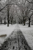 Snowed path and trees Stock Image