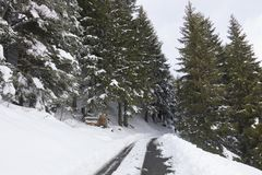 Snowed in road in winter forest in Switserland. Snowed in road in wintere forest in Switserland on an overcast day Stock Images