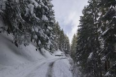 Snowed in road in wintere forest in Switserland. On an overcast day Royalty Free Stock Photography