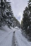 Snowed in road in wintere forest in Switserland. On an overcast day Stock Photography