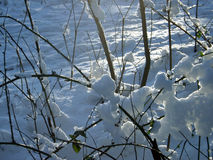 Snowed shrubbery. Snow laying on bushes with white shining snow background royalty free stock photos