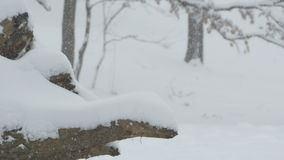 Snowed Stump stock video