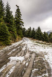 Snowed Trail Passing through Forest Stock Image