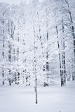 Snowed Tree Royalty Free Stock Photo