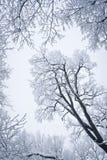snowed tree Royaltyfri Bild