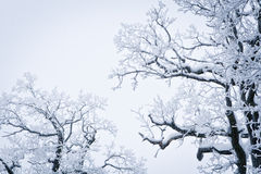 Snowed Tree Royalty Free Stock Photos