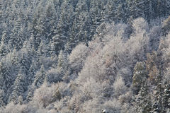 Snowed trees in Gorbea natural park Stock Photos