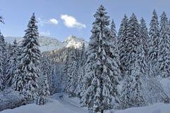 Snowed väg i bergen Arkivbild