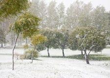 Snowfall Stock Photo