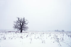 Snowfall. Royalty Free Stock Photography
