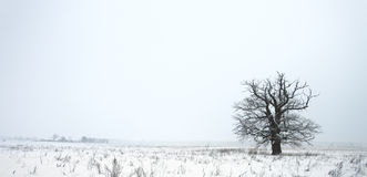 snowfall royaltyfri foto