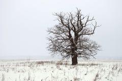 Snowfall. Royalty Free Stock Images