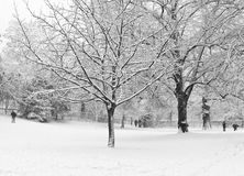 Snowfall. Winter landscape with snow-covered trees stock image