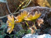 snowfall royaltyfria foton