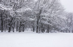 Snowfall Royalty Free Stock Images