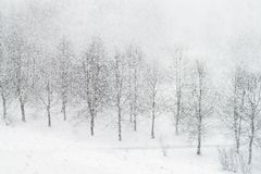 Snowfall. Heavy snowfalling in city park stock photography