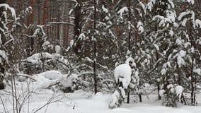 Snowfall stock footage