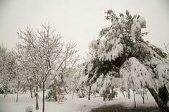 snowfall Obraz Royalty Free