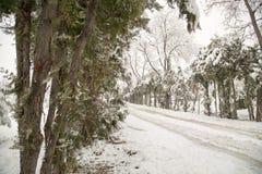 snowfall Photographie stock libre de droits