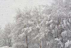 Snowfall2 Lizenzfreie Stockfotografie