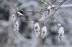 snowfall Obrazy Royalty Free