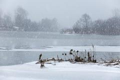 Snowfall Stock Image