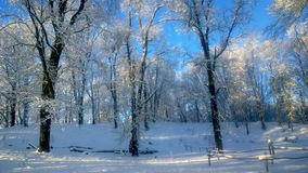 snowfall arkivbild