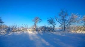 snowfall royaltyfri bild